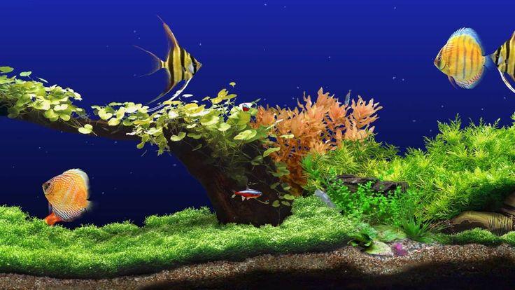 1000 ideas about aquarium screensaver on pinterest fish - Mm screensaver ...