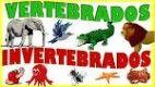 Elige los que sean animales vertebrados