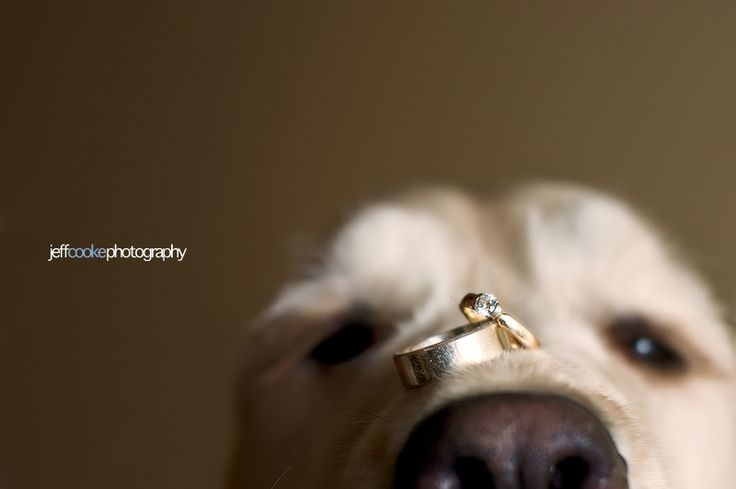 Oh my!  I love!: Puppies, Photos Ideas, Wedding Rings Photos, Pet, Wedding Photos, Dogs Lovers, Rings Pictures, Wedding Rings Shots, Wedding Dogs