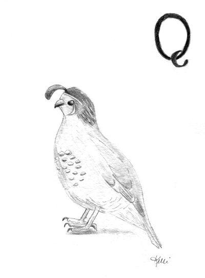 Q for Quail - part of my Alphabet Series