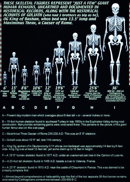 """STAR GATES: DIFFERENT RESIDENTS OF THE PLANET EARTH!!!  The chart on the left documents some of the more well known discoveries of """"giants"""" in our recent history. Some researchers have speculated that 10-foot giants were quite common as a species in Earth's distant past. One Giant skeleton was reportedly a towering 36 feet in height. WHAT DO WE KNOW?? WHAT DO YOU SEE??? WHAT DO YOU THINK???"""