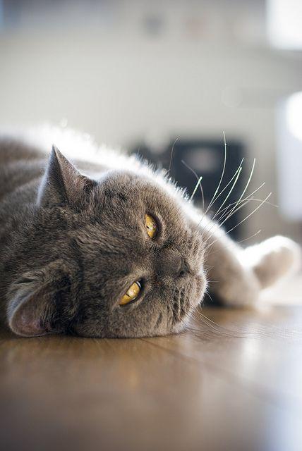gray cat...a nap.  ᘡℓvᘠ □☆□ ❉ღ // ✧彡●⊱❊⊰✦❁❀ ‿ ❀ ·✳︎· FR MAY 19 2017 ✨ ✤ ॐ ⚜✧ ❦ ♥ ⭐ ♢❃ ♦♡ ❊ нανє α ηι¢є ∂αу ❊ ღ 彡✦ ❁ ༺✿༻✨ ♥ ♫ ~*~ ♆❤ ☾♪♕✫ ❁ ✦●↠ ஜℓvஜ .