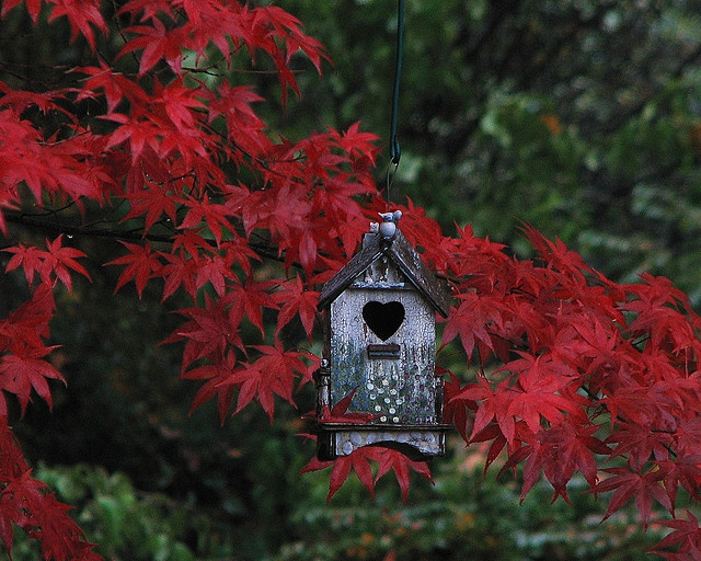 #Rustic birdhouse ... surrounded by the brilliant foliage of a Japanese Maple #garden decor #Japanese Maple