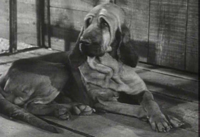 Duke -  Beverly Hillbillies TV Show