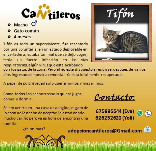 Tifón ( junio 2017 ) es todo un superviviente. Siendo un bebé fue rescatado por una voluntaria de una... #adoptar #mascotas #adopcion #perros #gatos