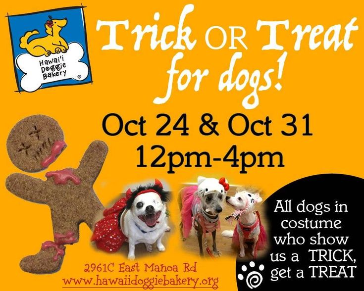 Trick Or Treat for Dogs Honolulu