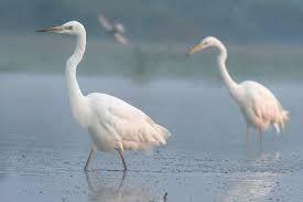 Ptaki brodzące w Polsce
