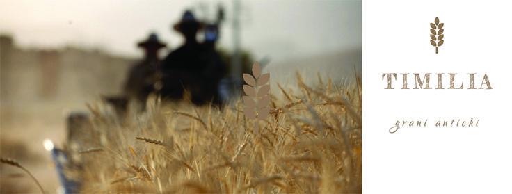 Il grano antico timilia: storia, usi e peculiarità
