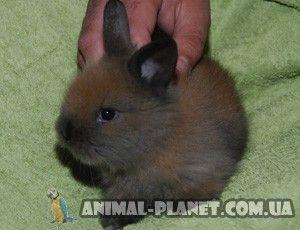 Продажа Декоративные карликовые кролики - разные породы -ФОТОГАЛЕРЕЯ
