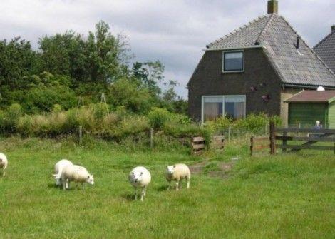 20 beste idee n over honden tuin op pinterest hond for Schapenboerderij te koop