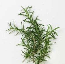 DIY Carpet fresh sprinklesEssential Oil, Ehow Com, Growing Rosemary, Herbs, Diy Carpets Fresh, Gardens, How To, Pruning Rosemary, Homemade Carpets