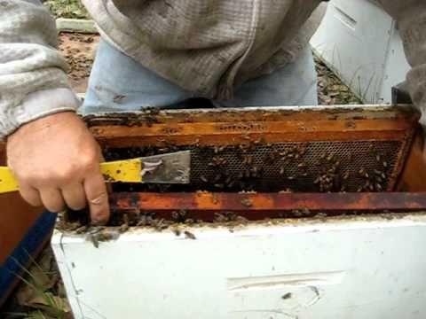 Vintage I uve Been Nuked Reed Honey Bee Nucs YouTube