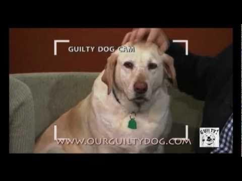 Denver Official Guilty Dog Video www.facebook.com/guiltydog - YouTube