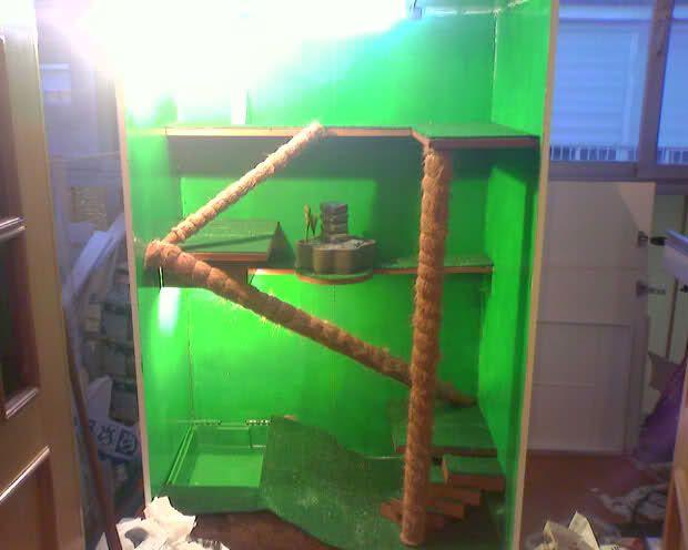 Como construir un terrario para tu Iguana   Wikifaunia, tu enciclopedia de animales