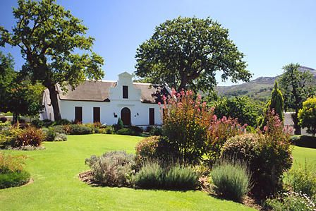 Laborie Vineyard, Paarl, South Africa