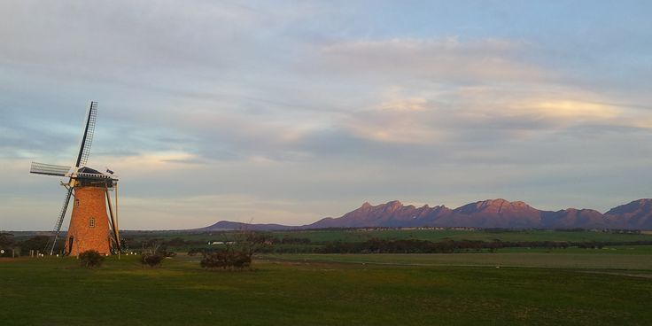 The Lily and Bluff Knoll