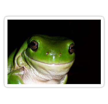 Frog Smile Sticker by StickerNuts