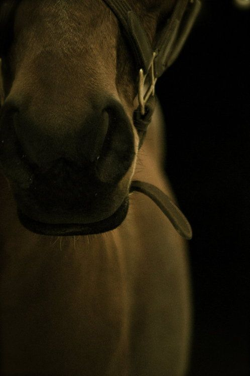 Dust of hooves: Hors Charms, Horses Charms