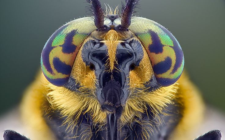 Wildlife photographer Yudy Sauw photographed the insects at his home studio in Banten, Indonesia, placing them less than an inch away from the camera.