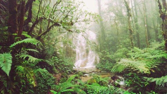 """Selembut embun dalam hutan hujan"" - Azy Villa  www.guesthousedimalang.com +6281233334879 Pin 51CF71ED  #love #TagsForLikes #TagsForLikes #TFLers #tweegram #photooftheday #20likes #amazing #smile #follow4follow #like4like #look #instalike #igers #picoftheday #food #instadaily #instafollow #followme #girl #iphoneonly #instagood #bestoftheday #instacool #instago #all_shots #follow #webstagram #colorful #style #swag"