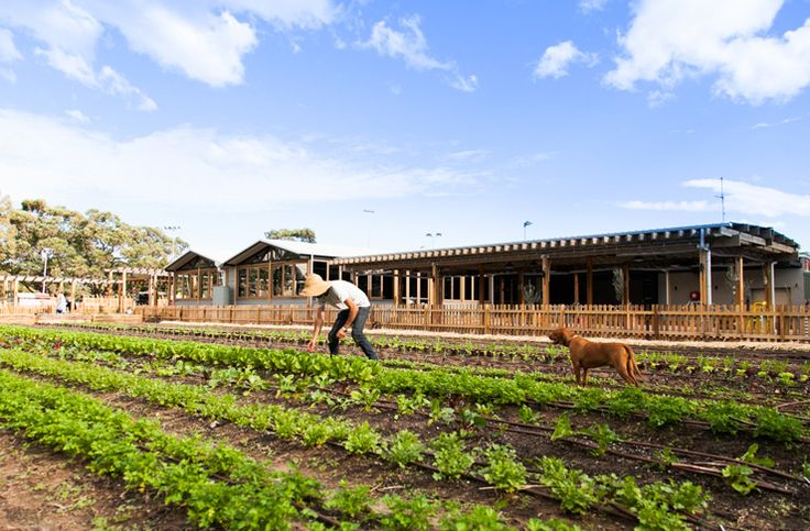 Acre Eatery is a farm-to-table restaurant in Camperdown that has an onsite urban city farm!