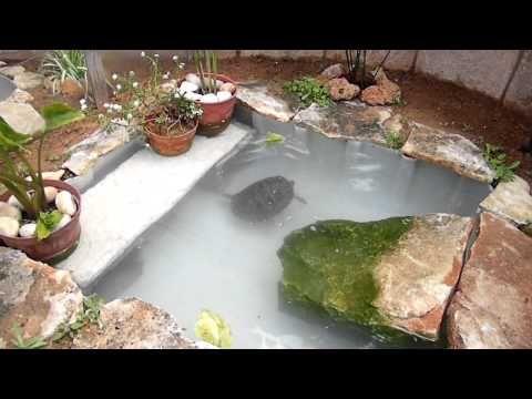 tortugas en mi estanque