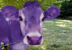 I've never seen a purple cow, I never hope to see one, but I can tell you anyhow, I'de rather see than be one.