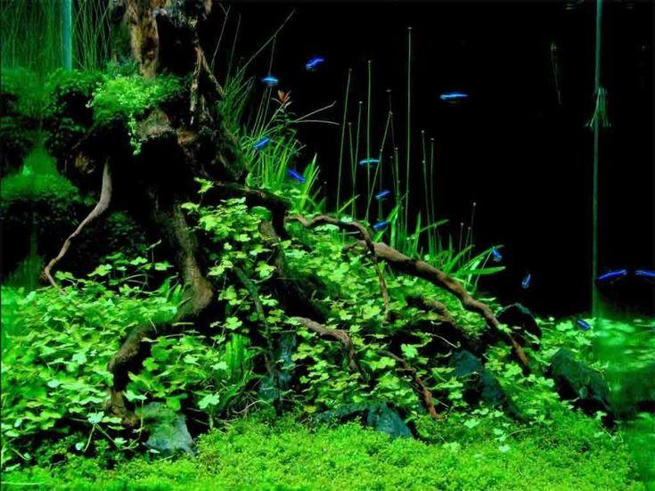 AQUASCAPE IDEA 84 | Aquascape, Tropical fish aquarium ...