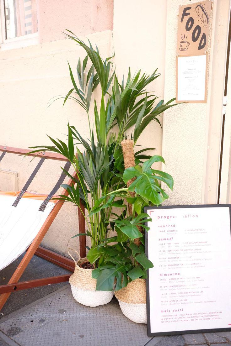 location plante: kentia, panier blanc en osier - les others
