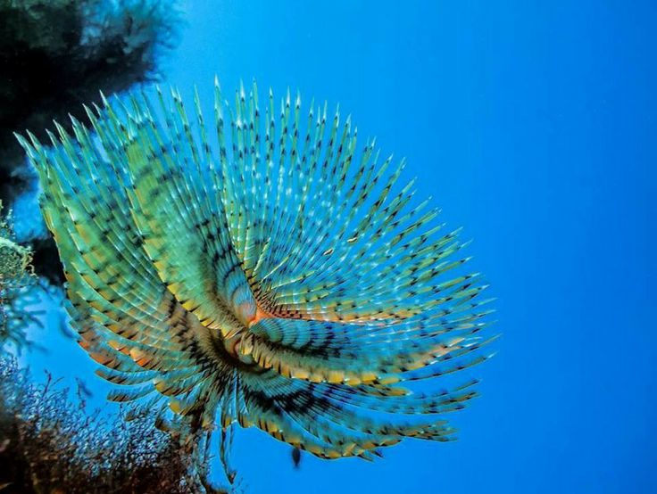 Zenobia Underwater World Photography Competition 2014 – VOTE FOR YOUR FAVOURITE PHOTO until 26th June 2014