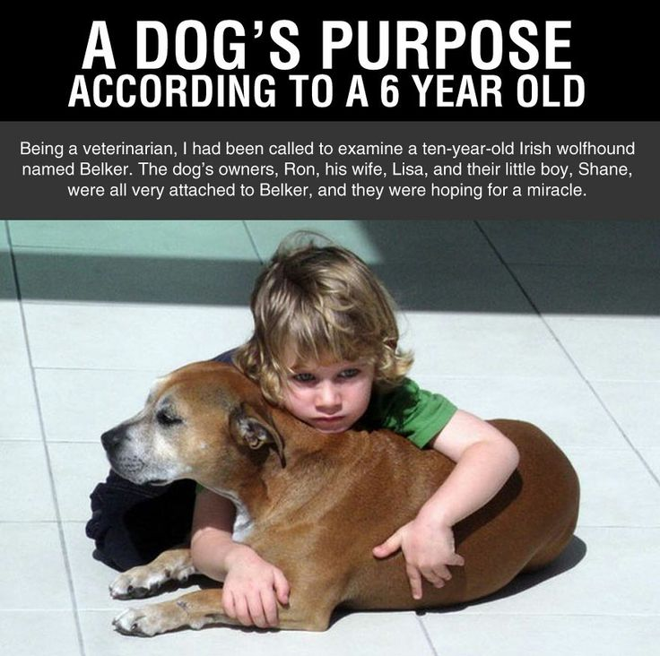 How Can I Tell How Old A Dog Is