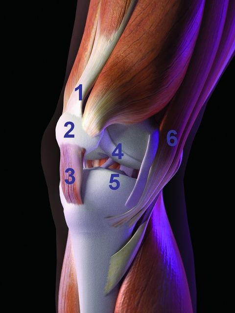 Zdrowe i silne kolana. Porady i ćwiczenia dla biegaczy - Runner's World