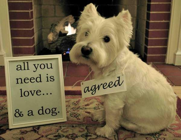 All you need is love... and a dog