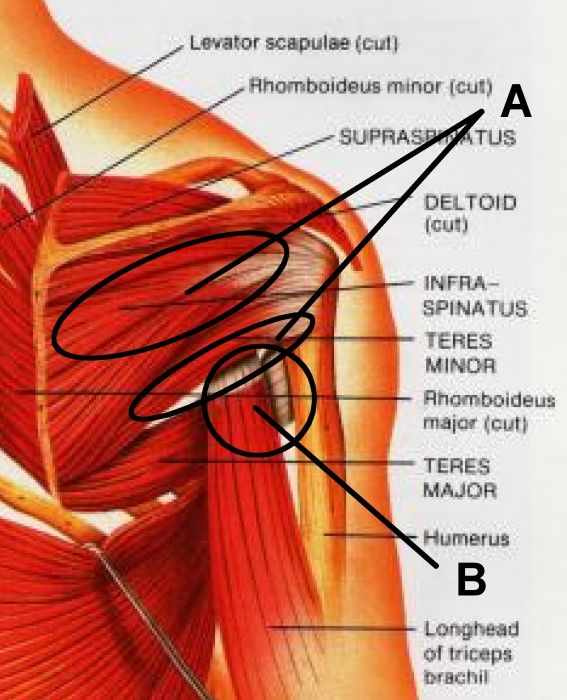 Massage Points for Shoulder Pain http://qigongweekly.com/?p=1091 Salon a' Bella Massage Cathy Stadler Licensed Massage Therapist