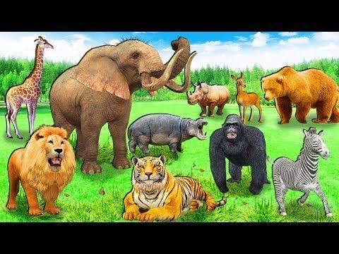 Best Animal Sounds Song (Jungle) - YouTube | School | Zoo