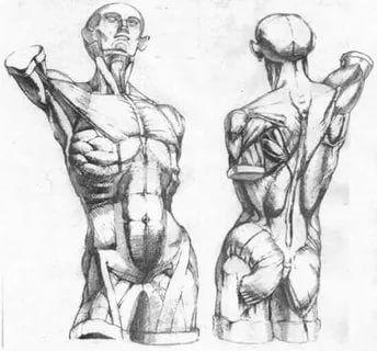 анатомический рисунок тела карандашом: 48 тис. зображень знайдено в Яндекс.Зображеннях
