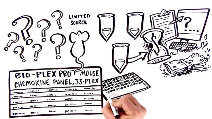 Bio-Rad - Get More Answers from Your Mouse with Bio-Plex - #voiceover #whiteboard #explainer #vobynophi #thedrawshop #biorad