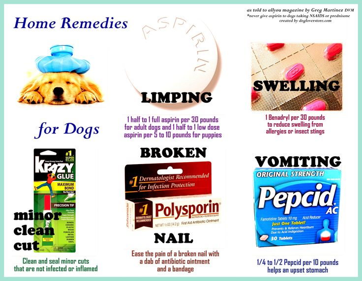 Home Remedies for Dogs --- great information!
