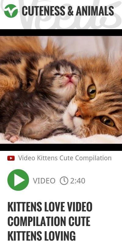Kittens Love Video Compilation Cute Kittens Loving | http://veeds.com/i/uKI5oHupjixMzCFD/cuteness/