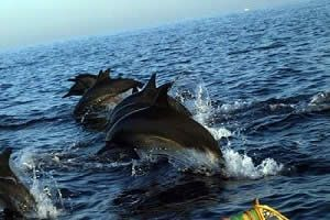 Paket Bali Dolphin Tour | Bali Wisata Tour