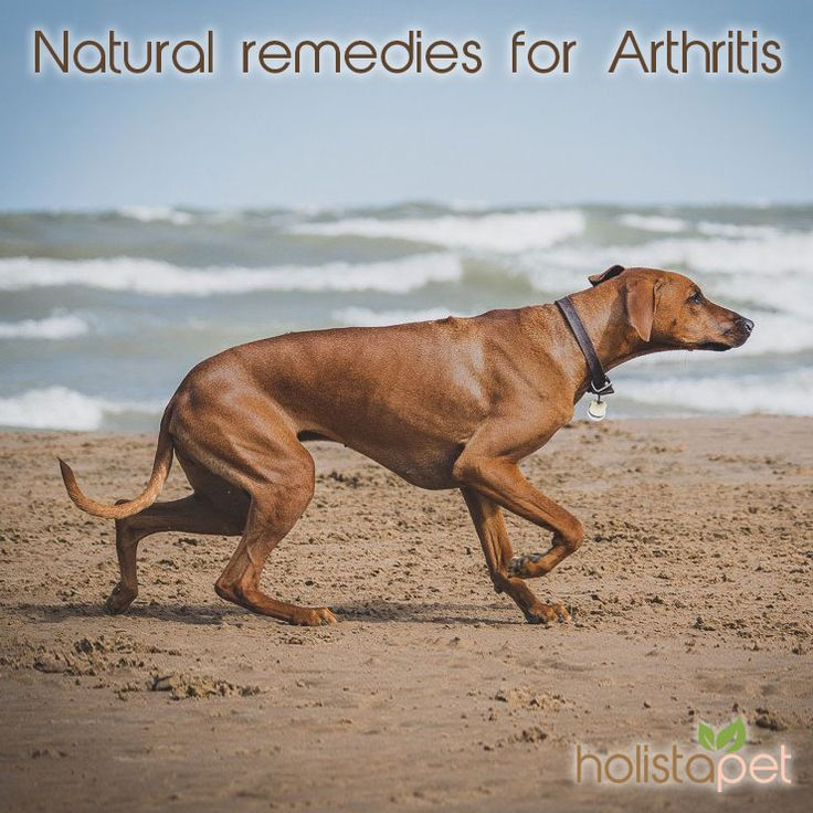 What Antiinflammatory Can You Give A Dog