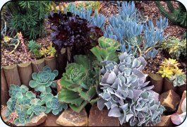 Types of Succulents with names, photos and descriptions.