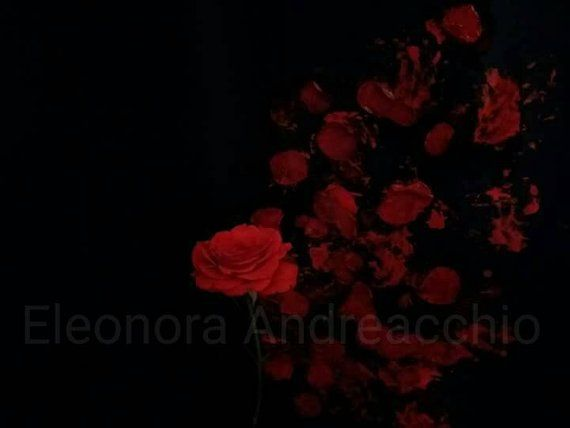 Instant Download Photo Of A Composition With Red Rose On Black