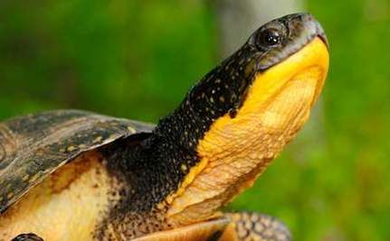 Record-Breaking petition filed to protect reptiles and amphibians from extinction