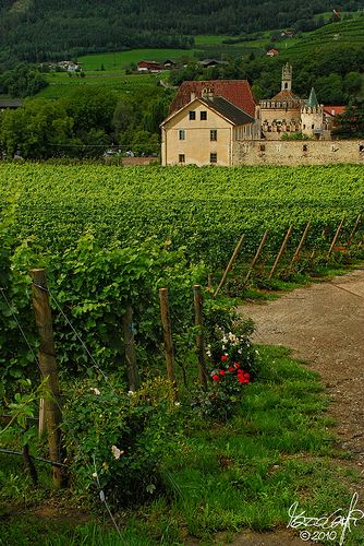Vineyards of Novacella Abbey | by Lord Markus