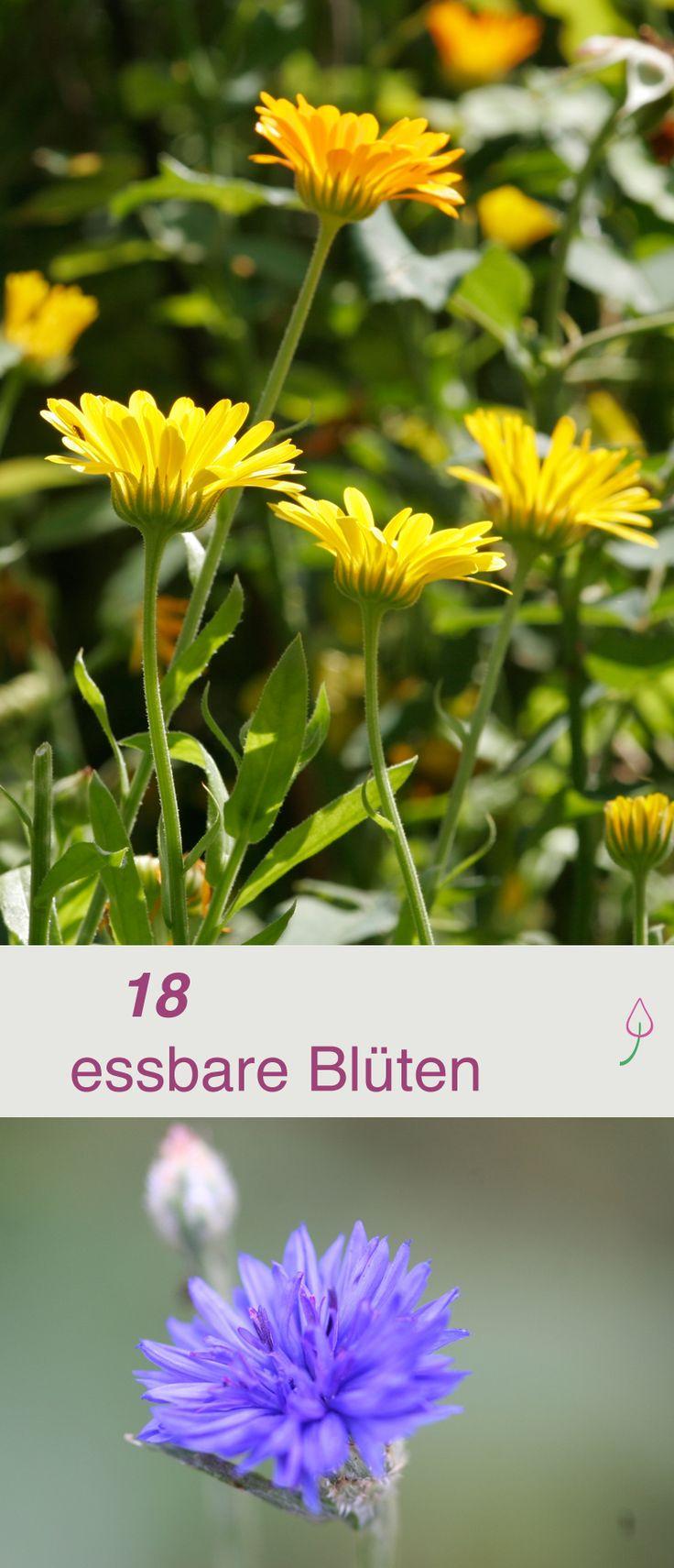 Die 18 besten essbaren Blüten und wie du sie verwenden kannst.