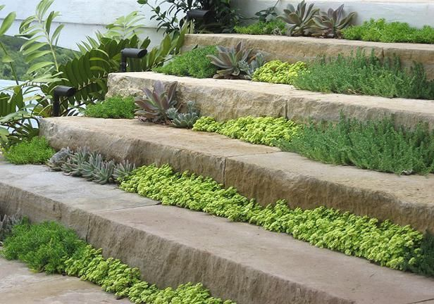 Steps were created from sawn Antique Leuders limestone, with internal positive drainage provided by granite gravel fill. Hidden drip-tubing irrigation waters the plants, which are primarily succulents, including stonecrop (Sedum), chartreuse Japanese stonecrop (Sedum makinoi 'Ogon'), ghost plant (Graptopetalum paraguayensis), crassula, various Echeverria cultivars, and hens and chicks. Image courtesy of Root Design Company.