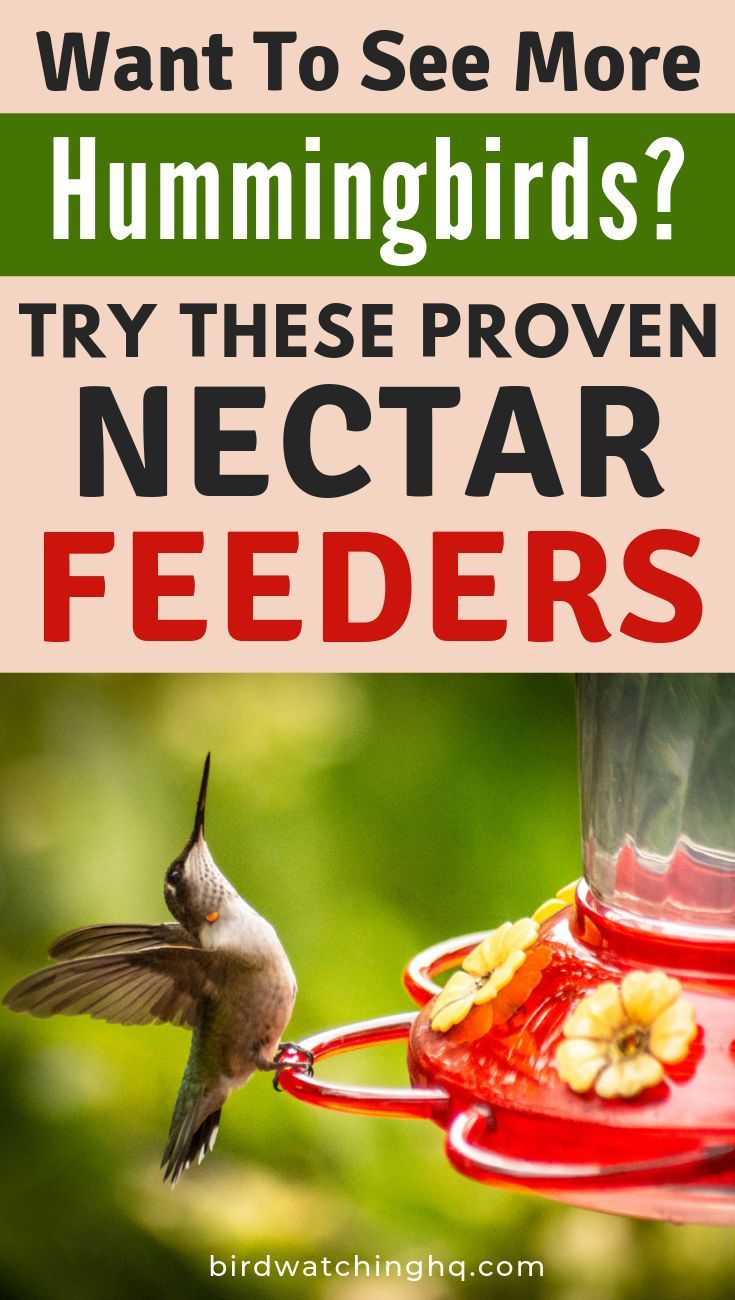 The 8 Best Hummingbird Feeders That Actually Work In 2020 With Images Humming Bird Feeders Hummingbird Feeder Recipe Hummingbird