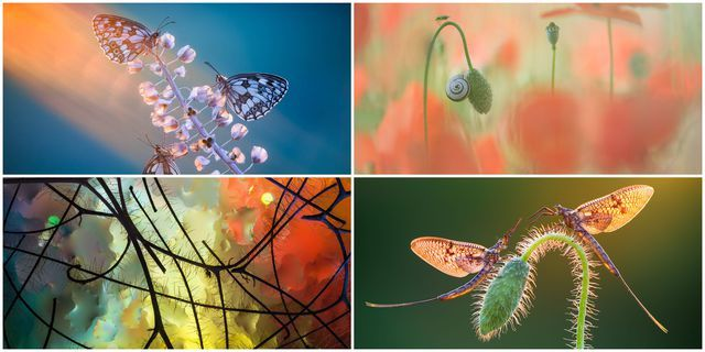 Winners Of Macro Art International Garden Photographer Of The
