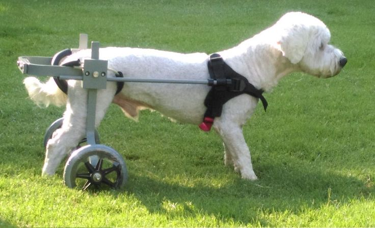 Huggiecart Dog Wheelchair, Size 3R, Approx. 20-40 lbs, Ready to ship